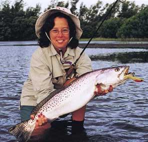 Sarasota fishing guided flats fly fishing backcountry for Sarasota deep sea fishing charters